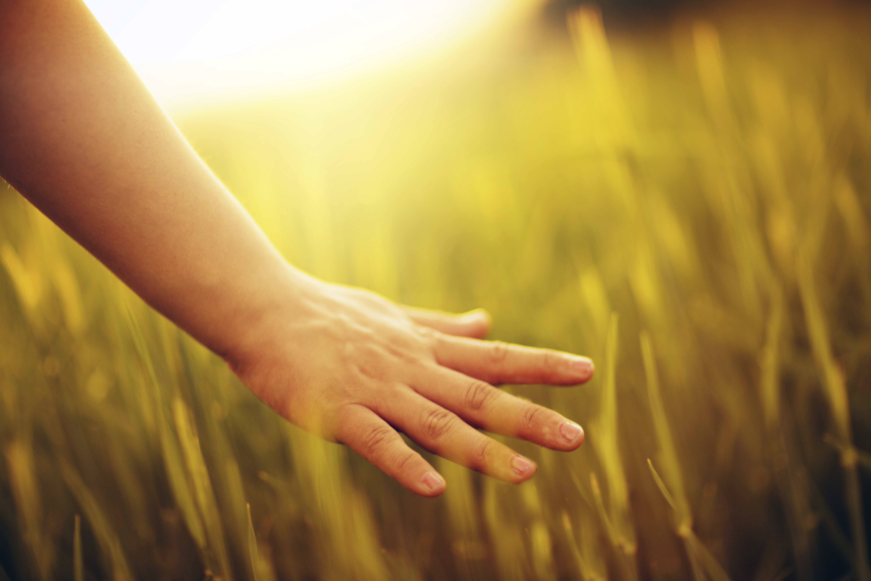 hand in a field iStock_000024523925_XXXLarge